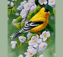 Male Goldfinch Phone Case by csforest