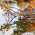 Broken Branch Reflected by kenspics