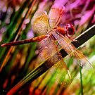 DRAGONFLY GOLDEN HARMONY by Tammera