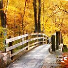 Bridge into Autumn by Nadya Johnson