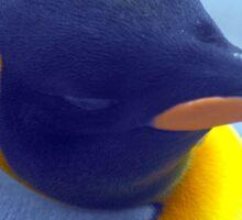 Colorful Penguin Sticker
