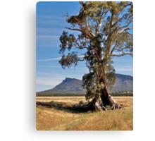 Cazneaux Tree, Wilpena, Flinders Ranges, SA. Canvas Print