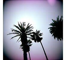 Holga Palms Photographic Print