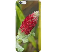 Wildflower - Crimson Clover - Trifolium incarnatum iPhone Case/Skin
