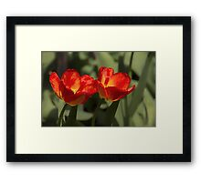 Fiery Tulips Framed Print