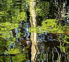 Cypress Reflection in Water by ishotit4u