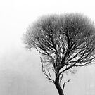 17.12.2016: Leafless Tree in Winter Fog III by Petri Volanen
