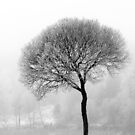 17.12.2016: Leafless Tree in Winter Fog IV by Petri Volanen