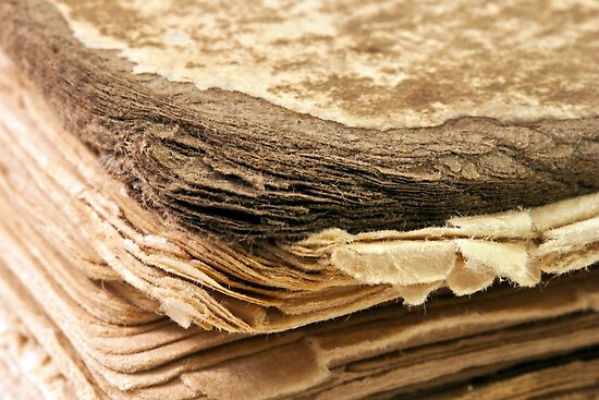 100 Year Old Book Macro  by Sandra Foster