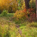 The woods on Sinton Pond (2)...Colorado Springs by dfrahm