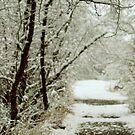 winter walk by Savannah Regier