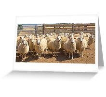 High Country Sheep At Omeo.......Off To The Shearing Shed.... Greeting Card