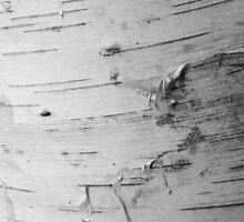 Bark by TrueheartPhoto