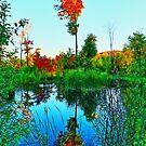 Fall Water Tree by Adam Kuehl