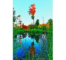 Fall Water Tree Photographic Print