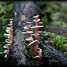 ~ Fungilicious ~ by Leeo