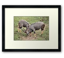 Who's Boss? Framed Print