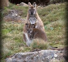 ~ Bennetts Wallaby ~ by Leeo