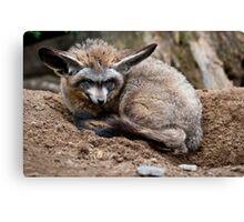 Bat-Eared Fox Canvas Print