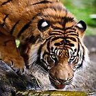 Thirsty Tiger by Monika Nakládalová