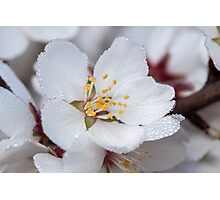 ~ Allow Yourself to Blossom ~ Photographic Print