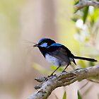 Nesting Season by byronbackyard
