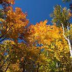 Glorious Fall Colors - Just Lift Your Head by Georgia Mizuleva