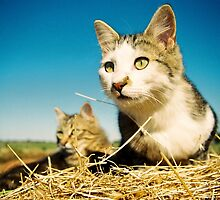 Fat Cat and Tigga by Norman Repacholi