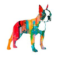 Boston Terrier 2 by Watercolorsart