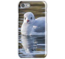 Slender-billed gull in natural habitat (Chroicocephalus genei) iPhone Case/Skin