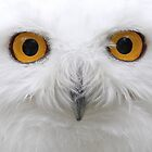 Snowy Owl - Eyes by Jim Cumming