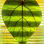 Heart Shaped Green Leaf with Shutter Stripes by ©The Creative  Minds