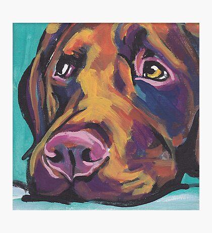 Chocolate Labrador Retriever Dog Bright colorful pop dog art Photographic Print