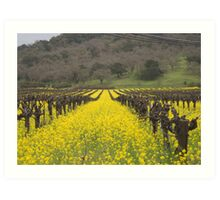 Mustard between the vines Art Print