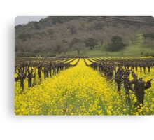 Mustard between the vines Canvas Print