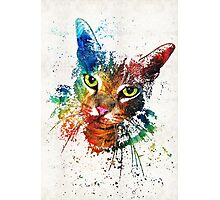 Colorful Cat Art by Sharon Cummings Photographic Print