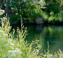 Putah Creek by randymir