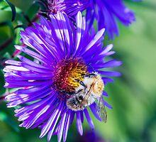 Bee 18 by Mark Bangert