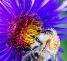 Bee 18 Sticker