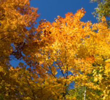 Glorious Fall Colors - Just Lift Your Head Sticker