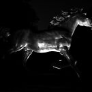 Shiny Stallion by Adam Kuehl