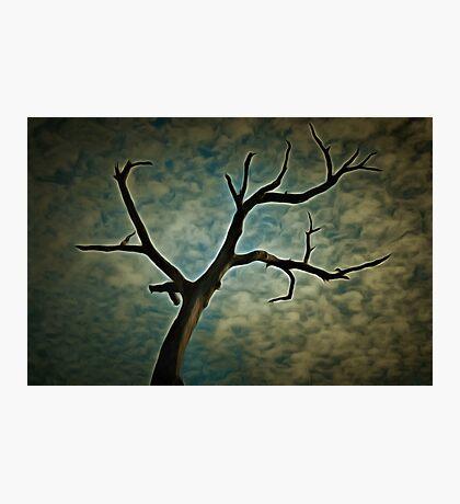 Aboriginal Canoe Tree Photographic Print