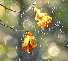 """"""" Autumn Rain """" by Richard Couchman"""