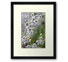 Sea Holly (I think!) Framed Print