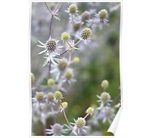 Sea Holly (I think!) Poster