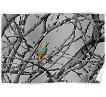 Blue Waxbill - Selective Beauty from Nature Poster