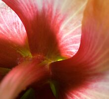 The Great Hibiscus by randymir