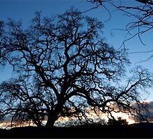 Evening Oak by randymir