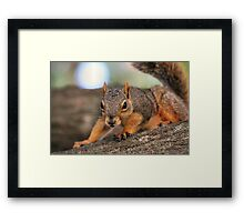 Is that a dog or a small pony? Framed Print