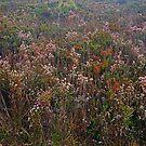 Bush Garden by Harry Oldmeadow